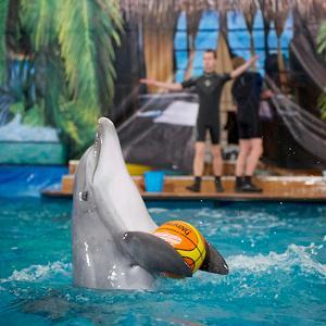 Дельфинарии, океанариумы Лазо