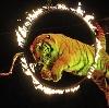 Цирки в Лазо