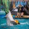Дельфинарии, океанариумы в Лазо